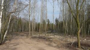 Kácení dřevin na ploše přelom 2010/2011