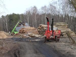 Kácení dřevin přelom 2010/2011